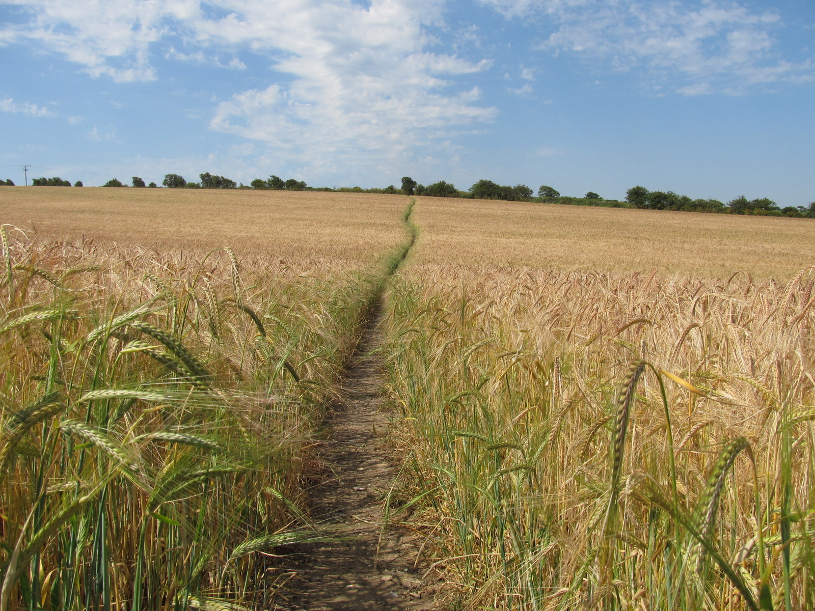 2015_0701 FIELDS OF BARLEY 008