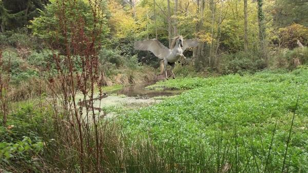 Templewood wetland walk