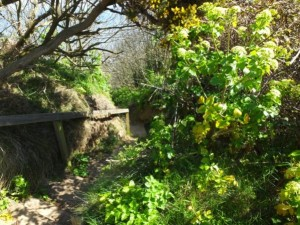 Footpath overgrowth